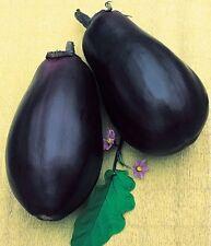 Russian Black Eggplant - FILIMON - 20 Heirloom Vegetable Aubergine Seeds