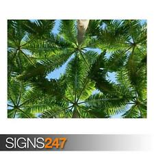 PALM TREES (AD969) NATURE POSTER - Photo Picture Poster Print Art A0 A1 A2 A3 A4