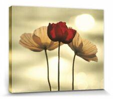 Mohnblumen Feld Leinwandbilder auf Keilrahmen A05715 Wandbild Poster