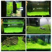 1000 stücke Aquarium Grassamen Wasser Wasser Home Aquarium Pflanze Decor Y5 P0K4