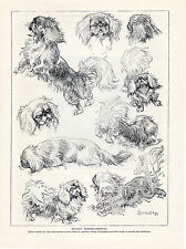 PEKINGESE CHARMING IMAGES THE A DOG IN VARIOUS MOODS LOVELY OLD 1934 PRINT