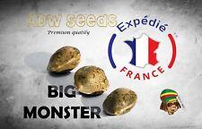 Big Monster ADW Seeds 3 Graines Féminisées Edition 2020 Expédition 24h