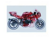 X-ray bike/raggi X MOTO stampa/tipo Print - 80x60cm