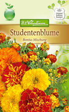 Studentenblume 'Bonita Mischung' - Tagetes patula, ca. 80 Samen 5274