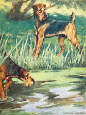 Airedale Terrier  Dog by Vernon Stokes 1906 ~ New  Large Note Cards