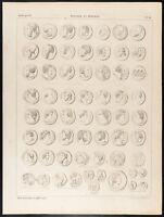 1860 Gravure histoire : Monnaies romaines & grecque. Numismatique. Médailles