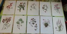 10 Ancienne Gravures Planches 1960 Airelle Rouge &  Marais,Azalée des Alpes
