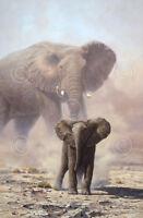 ART PRINT - Amboseli Child African Elephant by John Seerey-Lester Poster 11x14