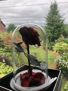 Eternal Real Red Rose Preserved Flower in a Glass Dome Red