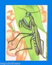 Animals-Flash 1964-Figurine-Sticker No 338-Praying Mantis-New