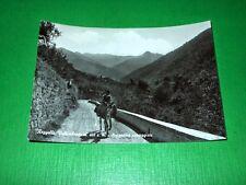 Cartolina Reggello Vallombrosa - Suggestiva passeggiata 1963