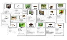 Mini Beast activity/ topic cards, childminder/ teacher resource