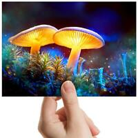 "Magical Mushroom Toadstool Small Photograph 6"" x 4"" Art Print Photo Gift #14811"