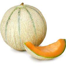 graines de melon charentais 85 graines environs