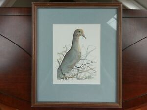 P. Buckley Moss Signed Print 'Grey Dove' Art1988 Framed Numbered 53 / 1000 Bird