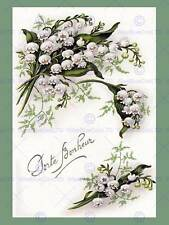 Vintage Botanical Illustration Flowers Fine Art Print Poster Cc4940