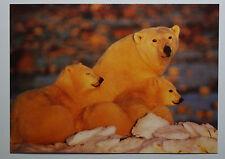 Schöne alte Ansichtskarte AK - Polarbären Polar Bears  B477 Tushita Fine Arts