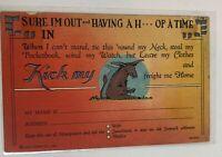 Vintage Postcard Comic Cartoon Donkey Mule Curt Teich C-116