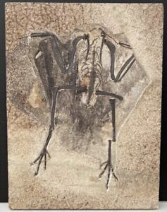 A  Large Partial Fossil Bird with Feathers from the Eocene of Wyoming