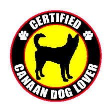 "Certified Canaan Dog Lover Lover 4"" Sticker"