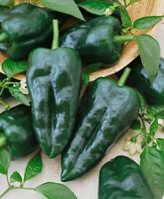 Ancho Grande Pepper Seeds, Poblanos Hot Peppers, Non-Gmo Heirloom Peppers, 50ct