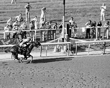 1978 Belmont Stakes AFFIRMED vs Alydar Glossy 8x10 Photo Print Racehorse Poster