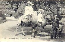 Zoo, Zoologischer Garten London, Kinder auf einem Kamel, 1908