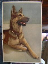 cpa illustrateur berger allemand chien dog