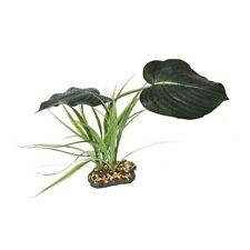 Komodo Woodland dosel Terrario Reptil Vivero Planta de selva tropical