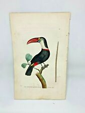 Red-Beaked Toucan - 1783 RARE SHAW & NODDER Hand Colored Copper Engraving
