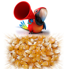 1,5kg Popcornmais(8€/kg) Sorte Mushroom,Popcorn Mais für Popcornmaschine& Pfanne