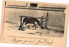 CPA  Saumur - Dressage d'un cheval en liberté (Un farceur)    (207711)