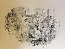 m3e ephemera book plate roland green  birds Robin courtship display