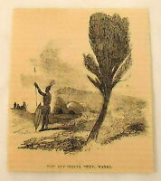 1859 magazine engraving~ THE EUPHORRIA TREE, NATAL