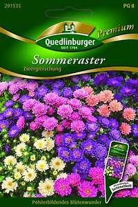 Saatgut - Samen Astern Sommer- Zwergmischung 291535 Quedlinburger AR5585