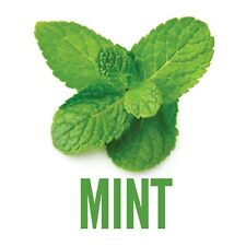 Mint Flavor Concentrate - Unsweetened (6 oz)