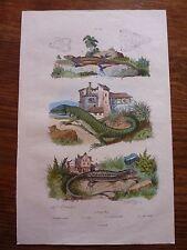 Gravure couleurs XIXe * Lézards - ocellé, vert, murailles, de Guérin *