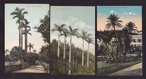 Lot of 3 Old Vintage Postcards of Royal Palms and Date Palm Cactus Bermuda