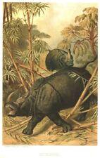 1885 Prang Chromo Rhino/Rhinocerous Huge African Jungle Animal Nice Print L@K!