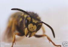 6 Wasp Black Yellow Realistic Foam Fly