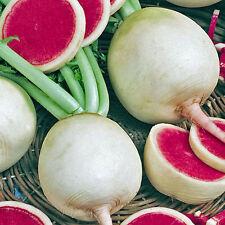 RADISH Watermelon Heirloom Seeds (V 76)