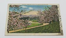 Vtg Beautiful Springtime Scene in the Heart of the Mountains Dogwoods 1930s