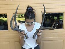 Antlers Wild Mule Deer 3X4!Horn~Knife~Decor~Moun t~Sheds~Trophy~Elk~Moose~L ot