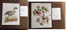 2 Vintage Dale C. Thompson Hawaii Wildlife Birds Art Print Nene Honeycreeper