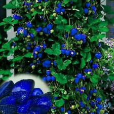 1 Pack 100pcs Rare Delicious Blue Strawberry Seeds Vegetables Fruit Plant Seed