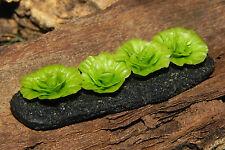 """Dollhouse Miniature Food Accessory 1/2"""" Scale Lettuce Garden Diorama"""