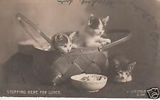 Stopping here for lunch three kittens RPPC 1905 80502