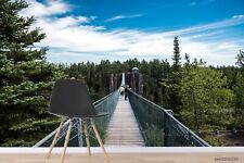 New Listing3D Sky Forest Trestle Wallpaper Wall Murals Removable Wallpaper 267