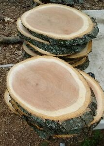 """20 Pc 11"""" to12""""Oak Log oval Slices Wood Disk Rustic Wedding Centerpiece Coaster"""