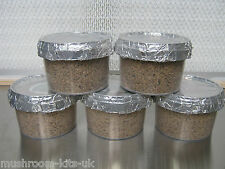 50x Magic farm oyster PF tek mushroom grow pots, for kit (medium size)